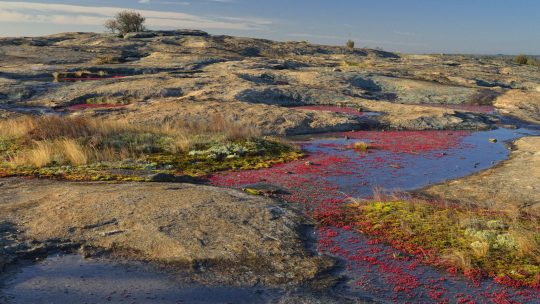Springtime Preview: Blooms at Arabia Mountain