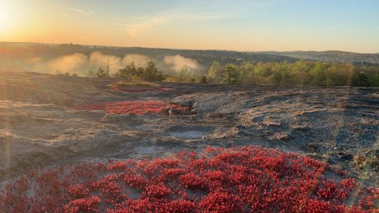 How to Hike at Arabia Mountain
