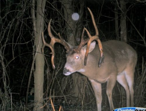 Outdoor Life's 101 Best Tips For Hunting The Deer Rut