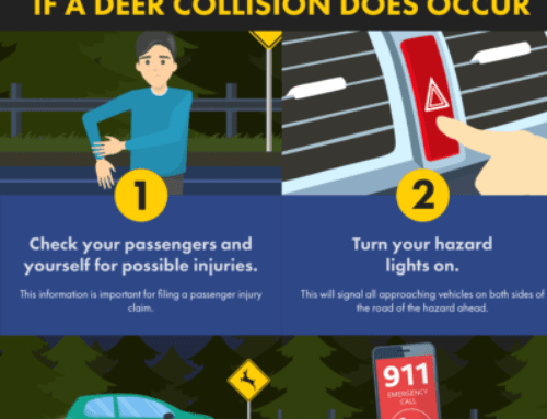 8 Things To Do If You Hit A Deer With Your Car