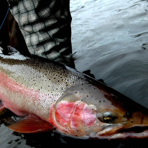 CHECK OUT OUR SUPER FLEXIBLE SKEENA RIVER PACKAGES