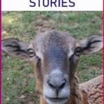 Funny fibro fog stories