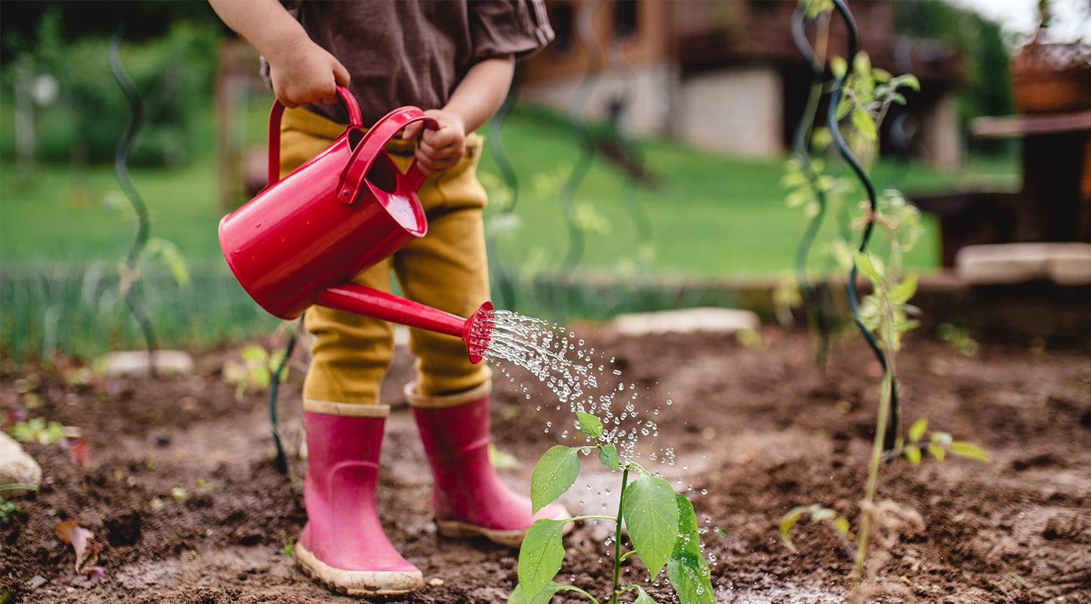 watering gardent