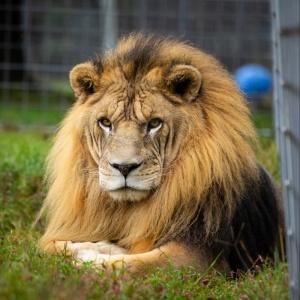 Animal Sanctuary Day