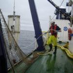 La anchoa sigue gozando de buena salud