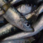 Desesperación en Huelva por las exiguas cuotas de boquerón y sardina