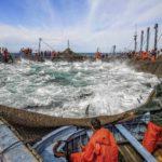 Los cerqueros del Mediterráneo y las almadrabas agotan la cuota de atún rojo