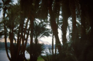 Egypt - Nile Palms