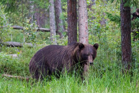 Estonia Bear Watching – Spending The Night In A Bear Hide