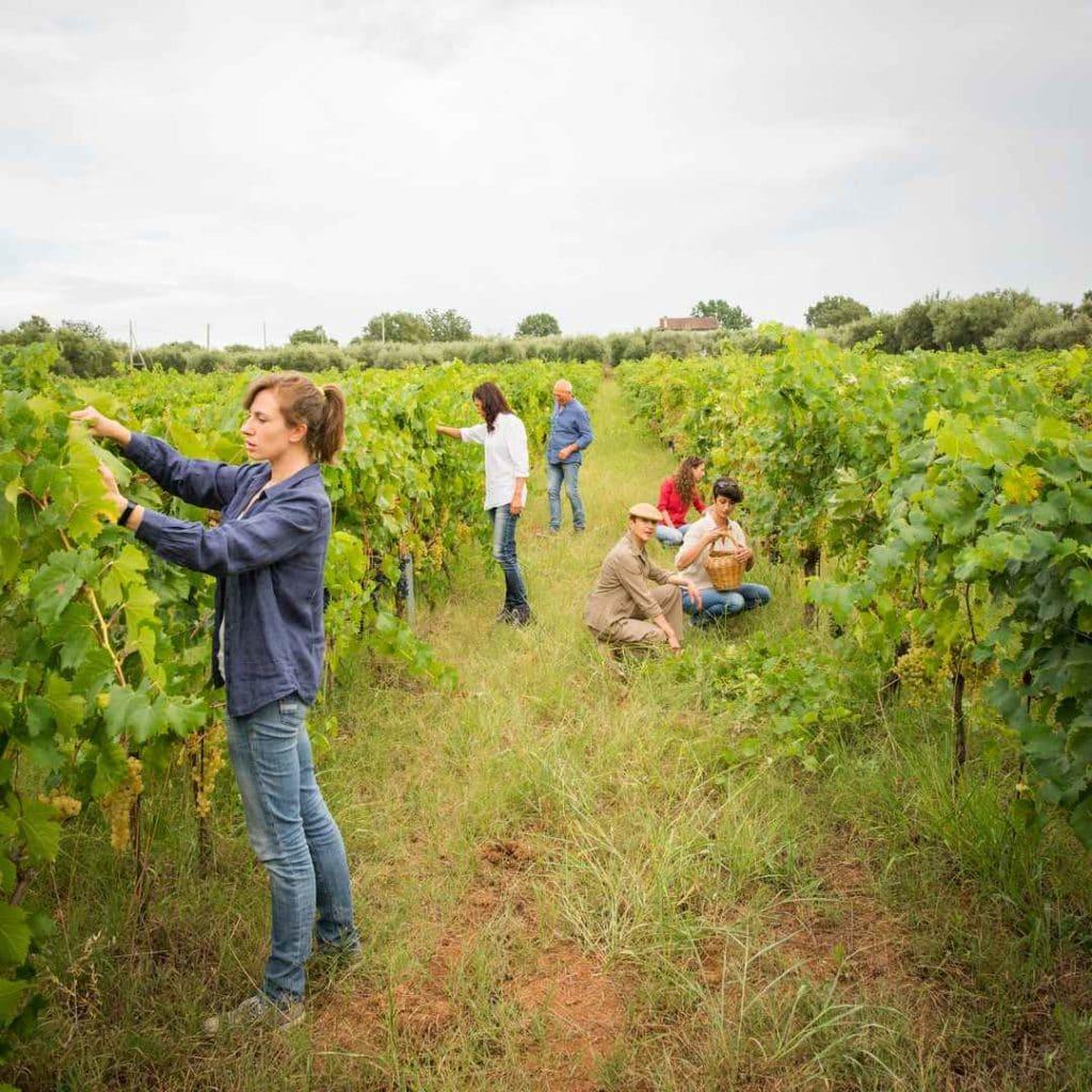 Fotografo-azienda-vini-maradei2-1024x1024 Azienda agricola Maradei Saracena / Cosenza