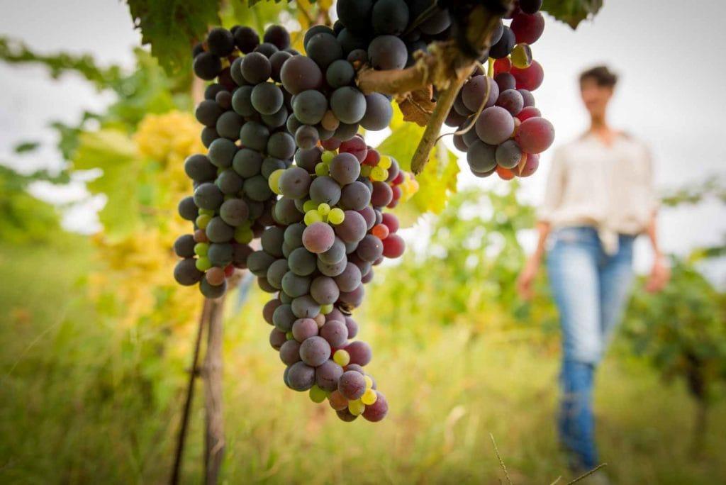 Fotografo-azienda-vini-maradei5-1024x684 Azienda agricola Maradei Saracena / Cosenza