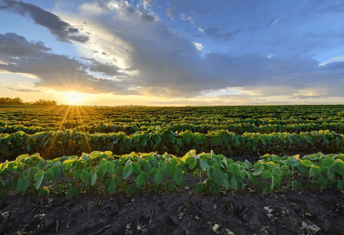 What Crops Grow Best In Alabama?