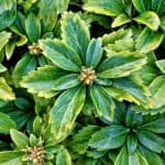 15 Fast Growing Ground Covers for Slopes