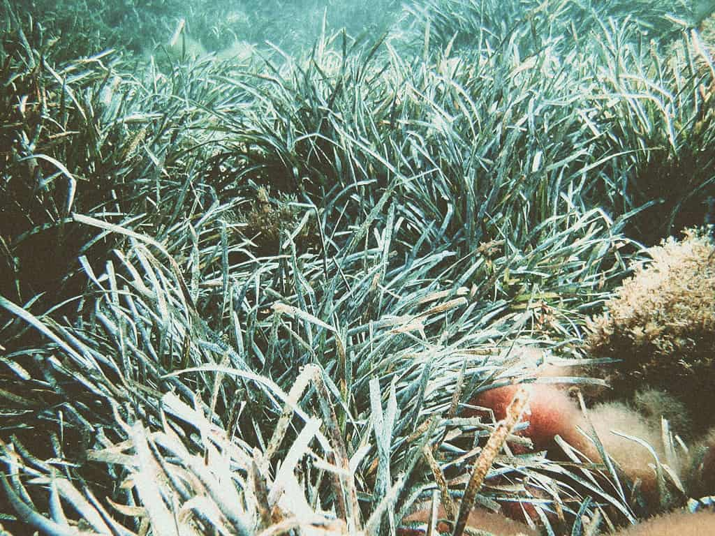 Protecting the Mediterranean Posidonia Seagrass around the islands