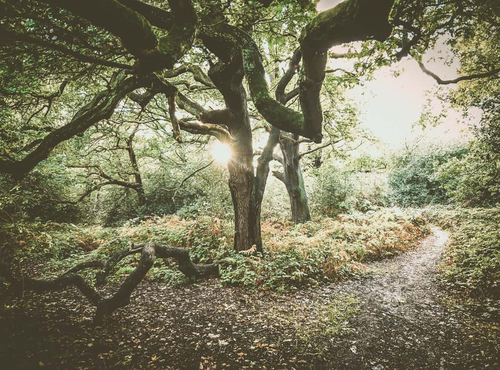 Volunteering in Epping Forest