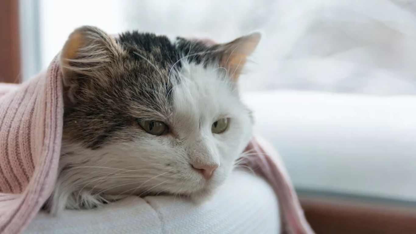 √ 15 Cara Mengobati Kucing Sakit dari Ahlinya, Paling Ampuh!