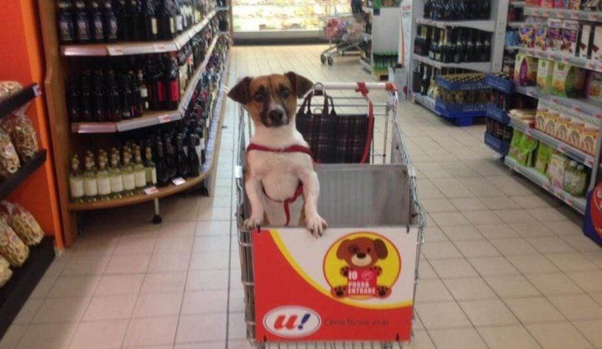 Ein Einkaufswagen für Hunde