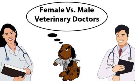 Female Vs. Male Veterinary Doctors