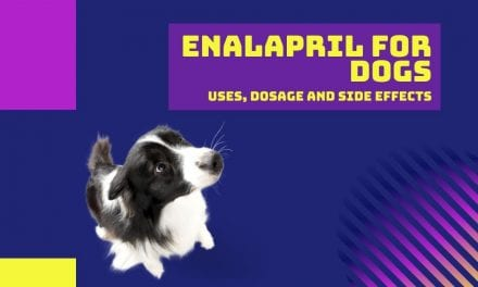 Enalapril for Dogs: Uses, Dosage and Side Effects