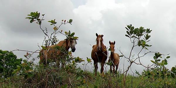 Brasilien Pferde Retreat