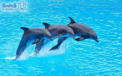 پارک دلفین کیش تخفیف پکیج کامل