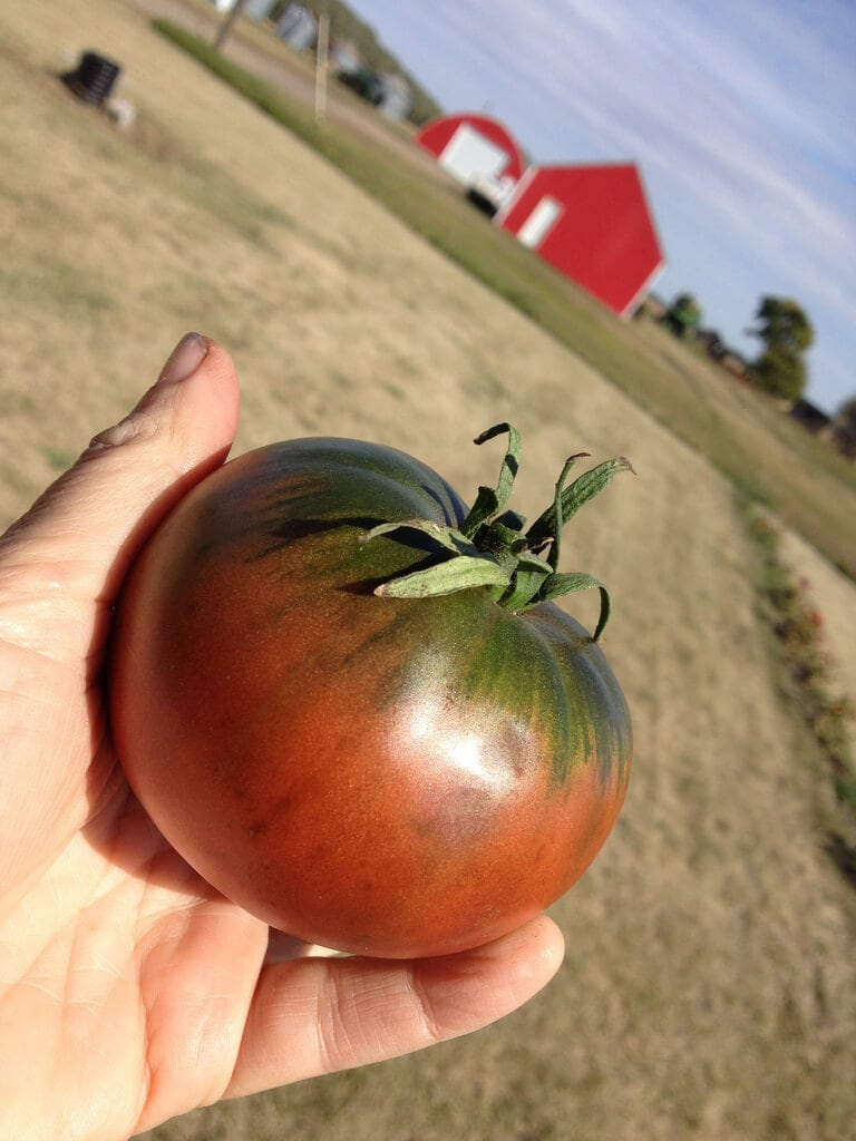 Getting more from your 'maters