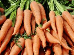 Сонник морковь к чему снится морковь во сне