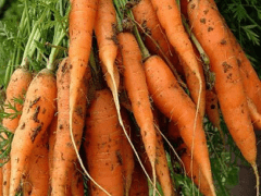 Как хранить морковь в домашних условиях?