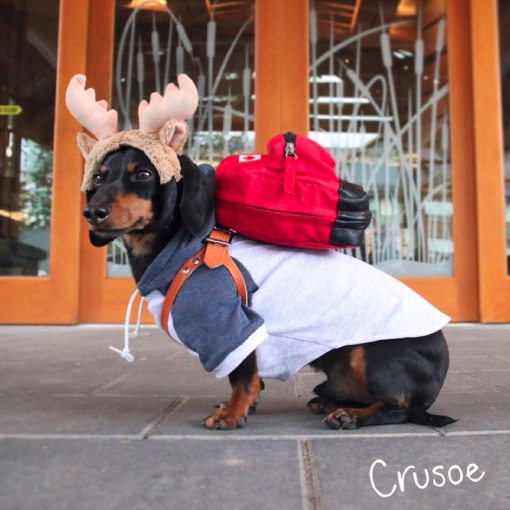 Crusoe the celebrity Dog at the Moose