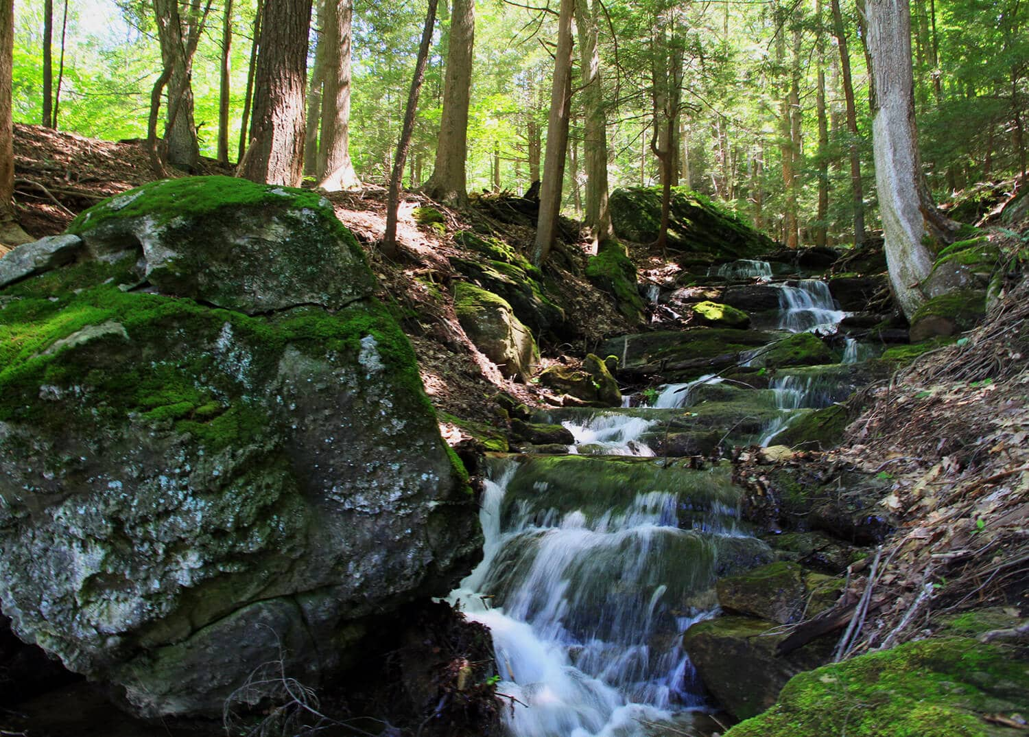 A beautiful and relaxing creek in the woods at Mountainside Treatment Center's Canaan campus.