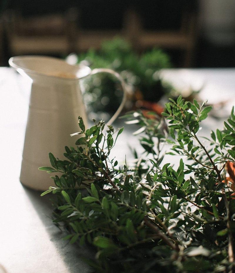 plantas-aromáticas