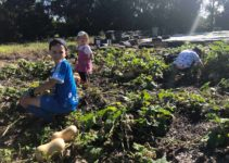 A Family Guide to Sustainable Living – Newcastle & Region Ideas