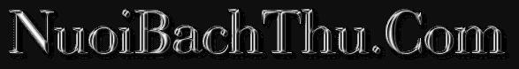 Soi cầu 247 vip – nuôi lô khung – rồng bạch kim 88