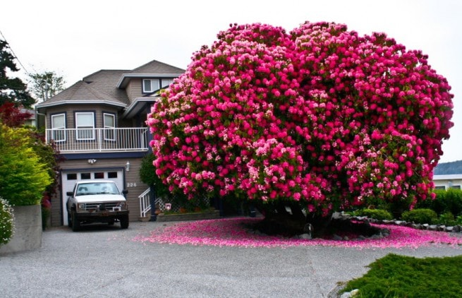 Най-красивите дървета по света