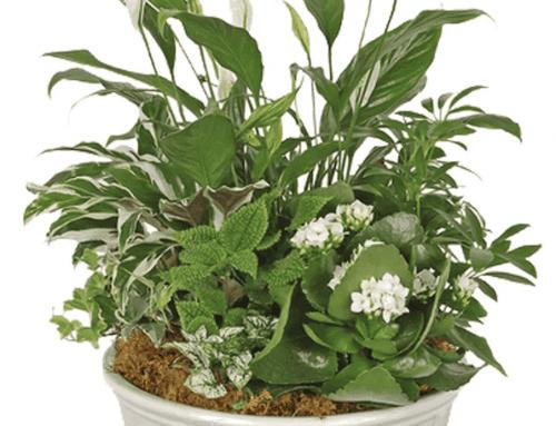 Plants to Celebrate National Indoor Plant Week