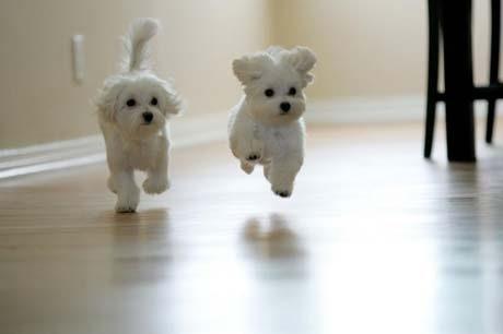 Gliding Puppy
