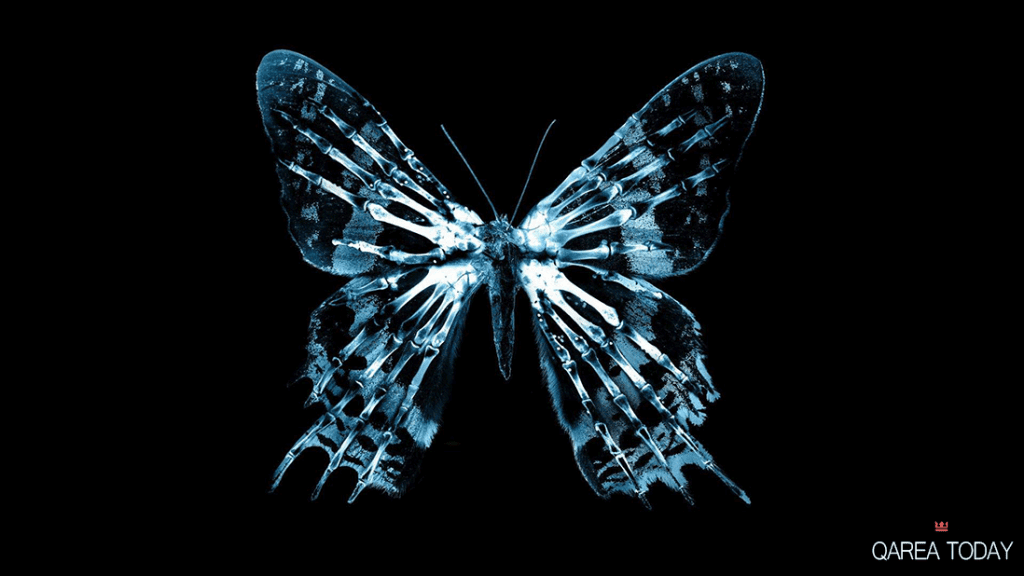 Butterfly Effect in Web App Development