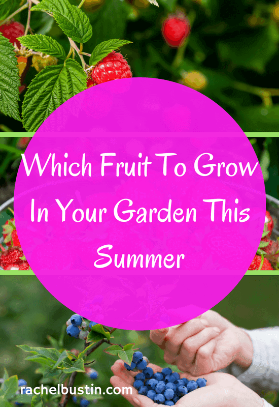 Which fruit to grow in your garden this Summer