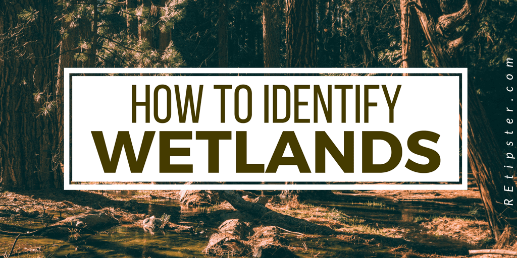 how to identify wetlands