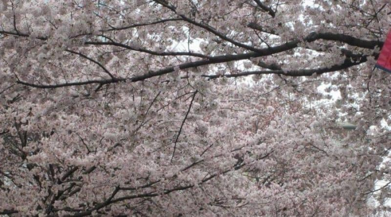 スミス英会話相模原校移り変わる日本の季節