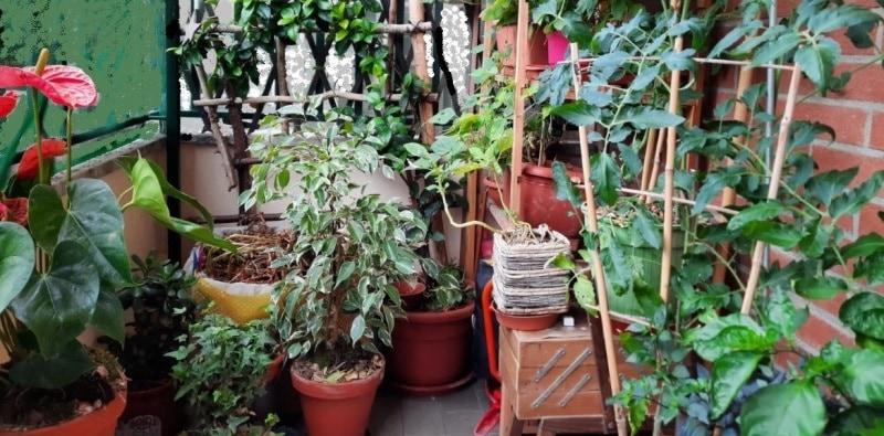 balcone bio-piante da orto insieme a pante decorative