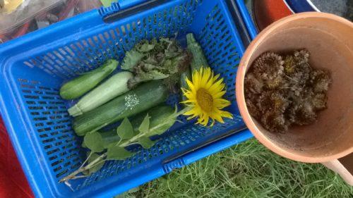 Zucchine Girasole Cestino