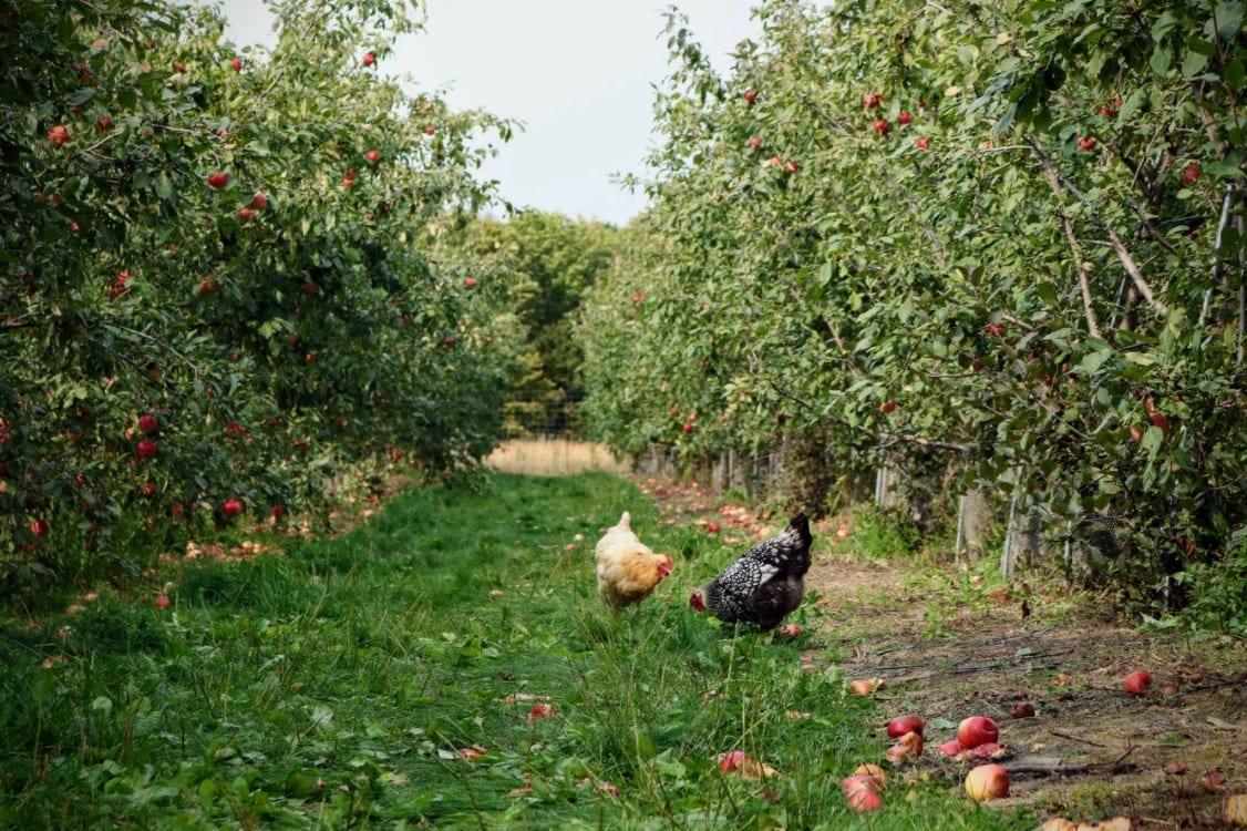 Agricoltura naturale o agricoltura industriale?