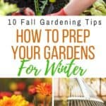 Tips and Trick on how to Prep your gardens for winter with these 10 Fall Garden Clean-Up Tips. #fallgardening #gardeningtips #gardeningideas