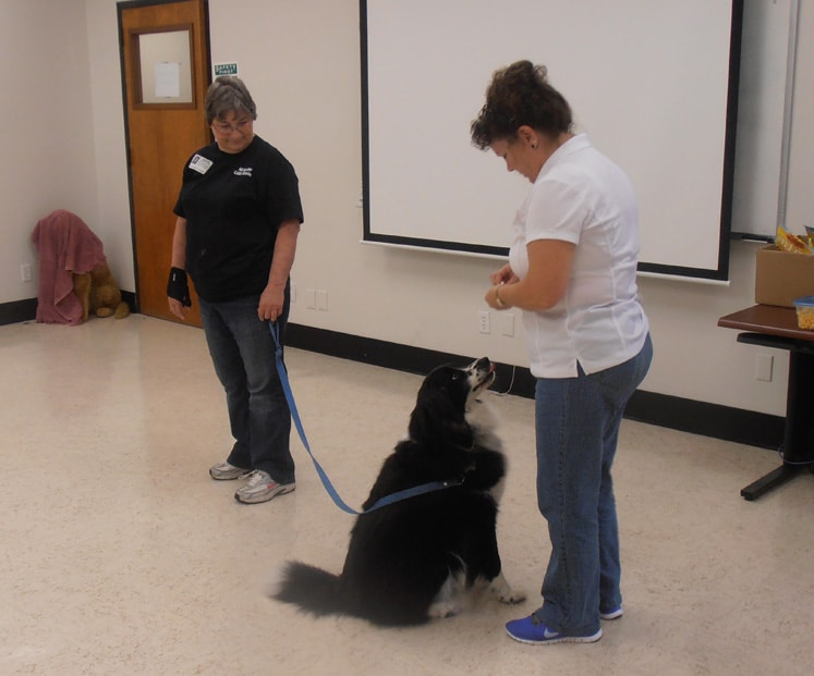 Nancy giving a workshop about dog training