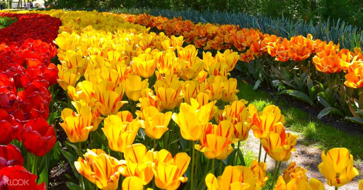 Keukenhof and Flowerfields Tour from The Hague