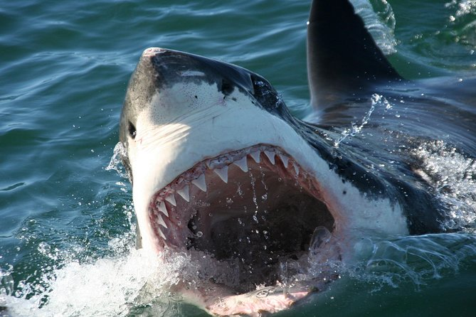 Shark Cage Diving Tour in Gansbaai with Private Transfers from Cape Town