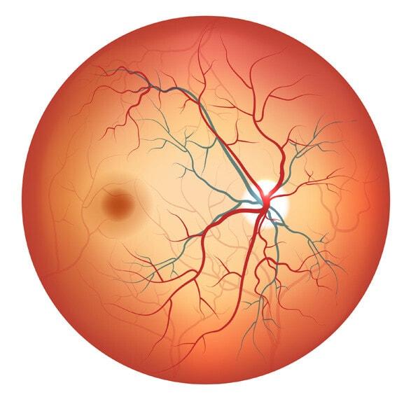 Retinas Functions
