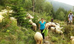 260 de oi vs. 9 oameni (pe aceeaşi cărare îngustă, din direcţii opuse)