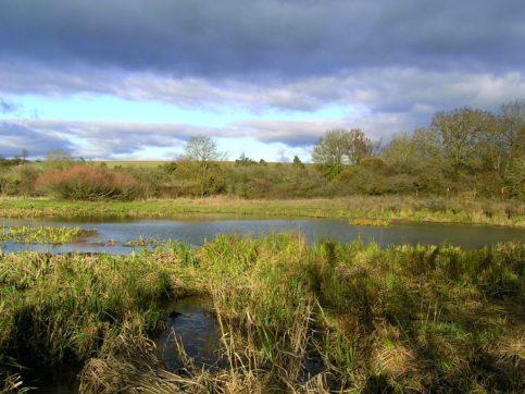 Zones humides, zones utiles : agissons !